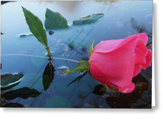 Rose And Water. Greeting Card by Nereida Slesarchik Cedeno Wilcoxon