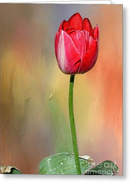 Red Tulip At Sunset By Kaye Menner Greeting Card