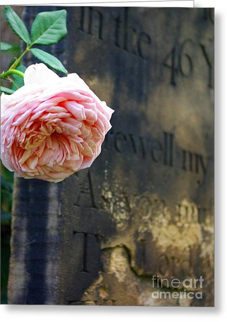 Rose At The Grave Greeting Card