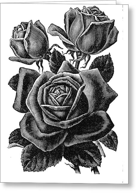 Greeting Card featuring the digital art Rose Black by ReInVintaged