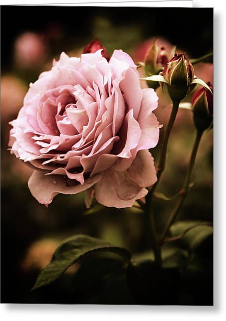 Rose Blooms At Dusk Greeting Card by Jessica Jenney