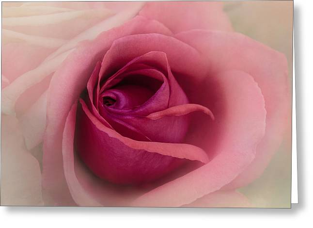 Rose Blush Greeting Card by Terry Davis
