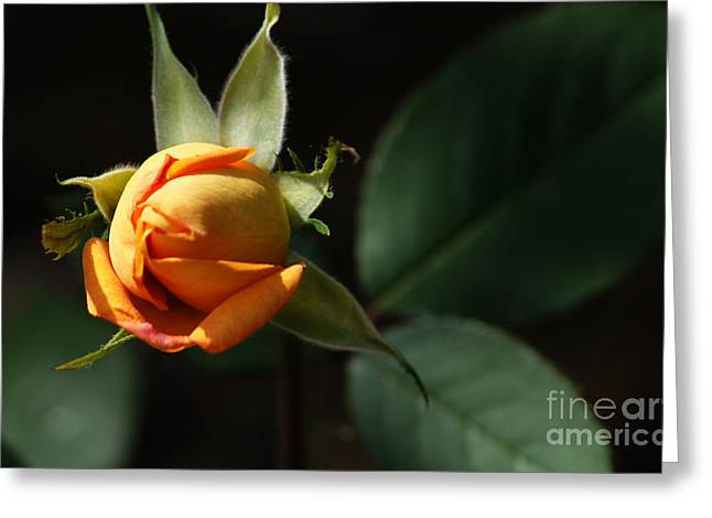 Greeting Card featuring the painting Rose Bud by Debra Crank