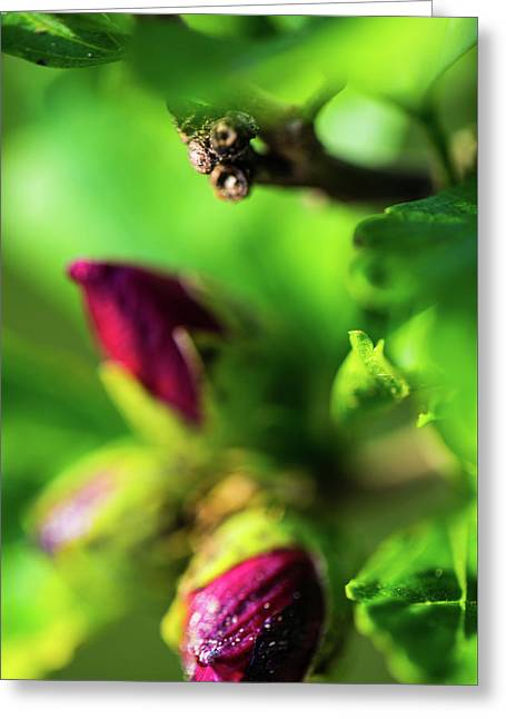 Rose Buds Body Guard Greeting Card