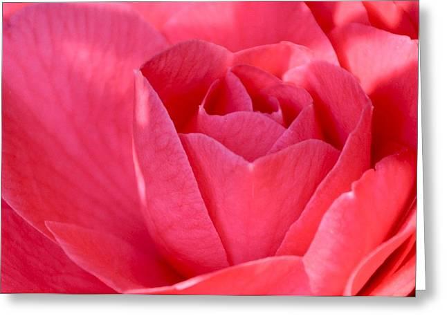 Rose Camellia Greeting Card by Lori Kesten