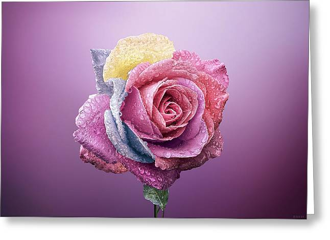 Rose Colorfull Greeting Card by Bess Hamiti