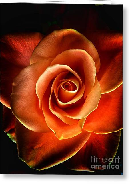 Greeting Card featuring the photograph Rose by Donald Paczynski