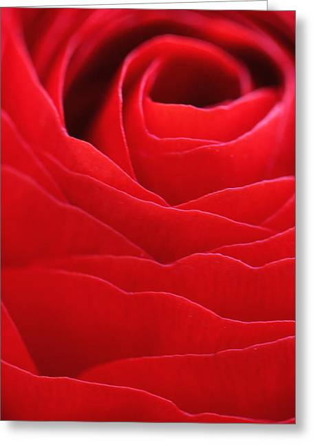 Rose Greeting Card by Falko Follert