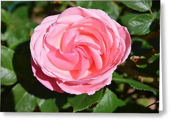 Greeting Card featuring the photograph Rose Flower by Margarethe Binkley