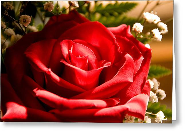 Rose For My Valentine Greeting Card by Thomas R Fletcher