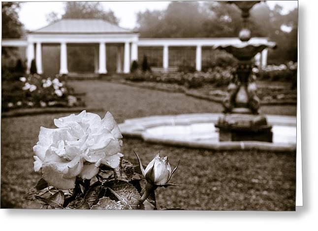 Rose Garden Monochrome Greeting Card
