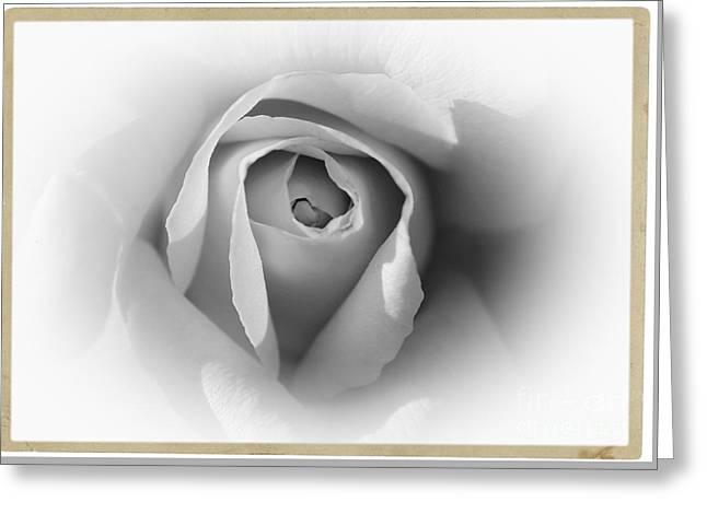 Rose - High Key Greeting Card
