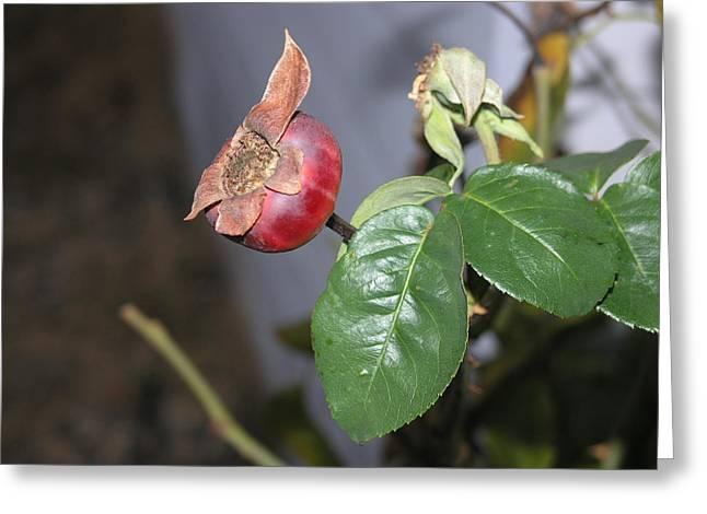 Rose Hip Greeting Card