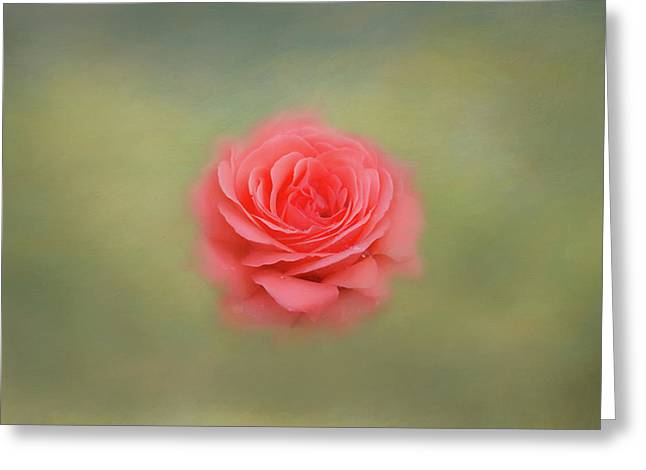 Greeting Card featuring the photograph Rose Impressions by Kim Hojnacki