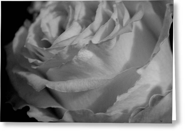 Rose In Black And White Greeting Card by Betty Northcutt