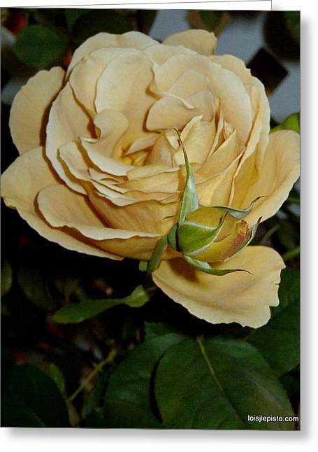 Rose In Ecru Greeting Card by Lois Lepisto