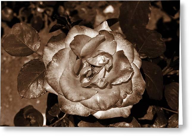 Rose In Iron Light Greeting Card
