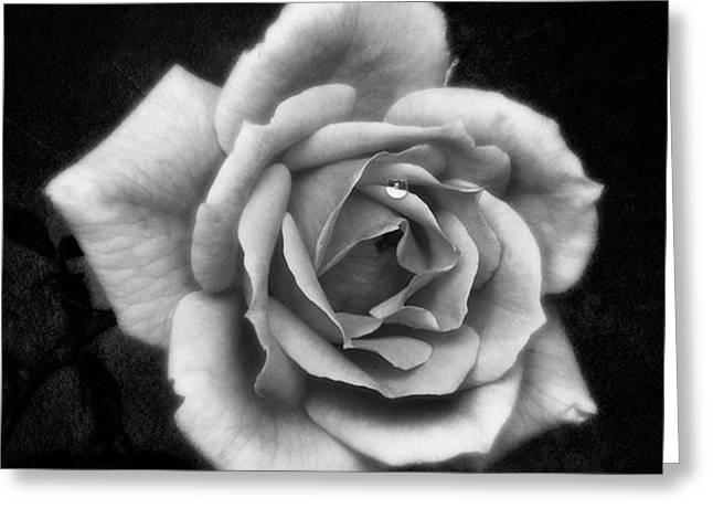 Rose In Mono. #flower #flowers Greeting Card