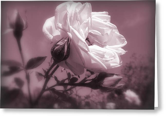 Rose In Rose Greeting Card by Susan Lafleur