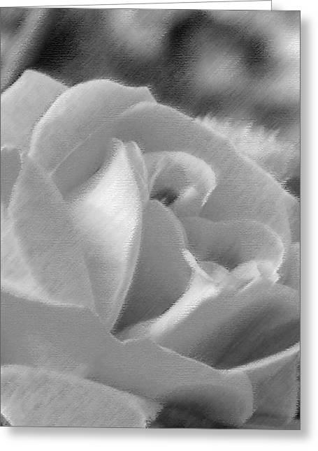 Rose Greeting Card by John Bradburn