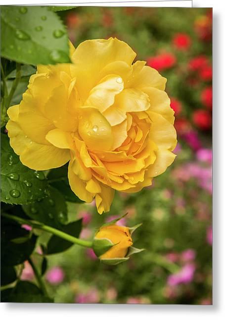 Rose, Julia Child Greeting Card