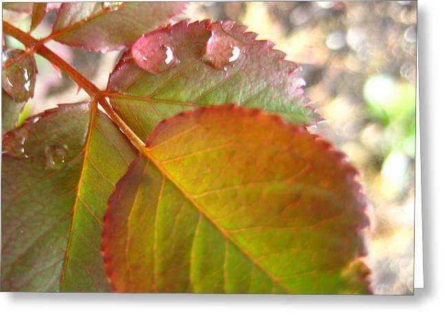 Rose Leaves Greeting Card by Shirley Sirois
