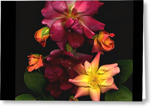 Rose Greeting Card by Lloyd Liebes
