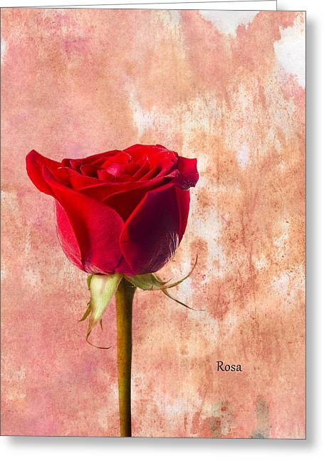 Rose Greeting Card by Mark Rogan