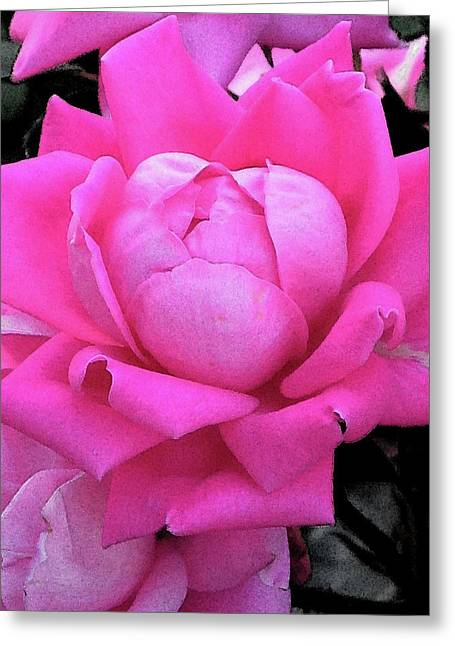 Rose Greeting Card by Michele Caporaso