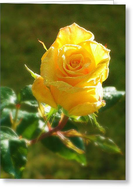 Rose Of Friendship Greeting Card by Mg Blackstock