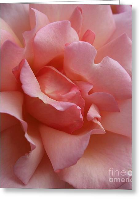 Rose Of Light Greeting Card by Deborah Brewer