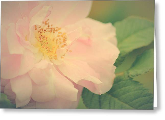 Rose Of Mine Greeting Card by The Art Of Marilyn Ridoutt-Greene