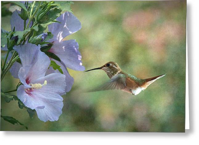 Rose Of Sharon Attraction Greeting Card by Angie Vogel