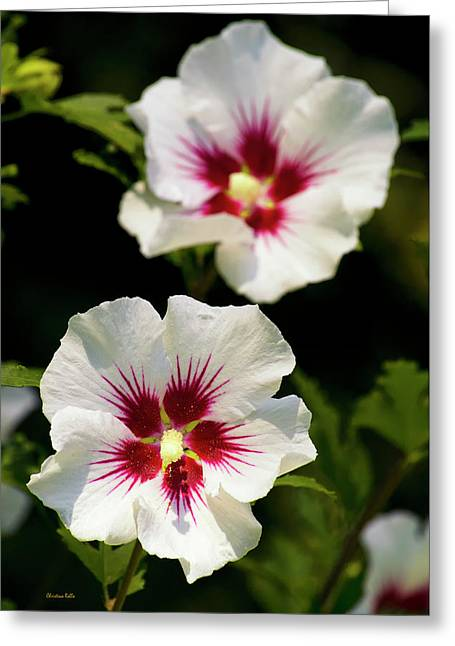 Rose Of Sharon Greeting Card by Christina Rollo