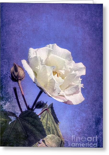 Greeting Card featuring the photograph Rose Of Sharon In Blue Fog by Elaine Teague