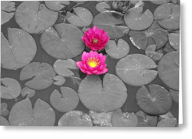 Rose Of The Water Greeting Card