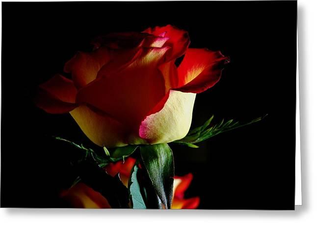Rose On Black Greeting Card by ShaddowCat Arts - Sherry