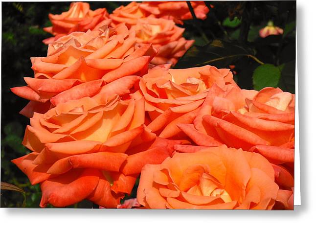 Rose Path Jubilee Greeting Card