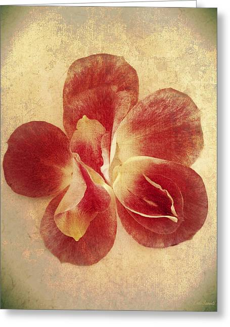 Greeting Card featuring the photograph Rose Petals by Linda Sannuti