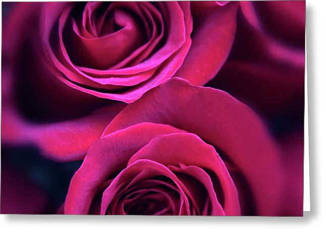 Rose Rapture Greeting Card by Jessica Jenney