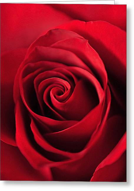 Rose Red Greeting Card by Laura Mountainspring