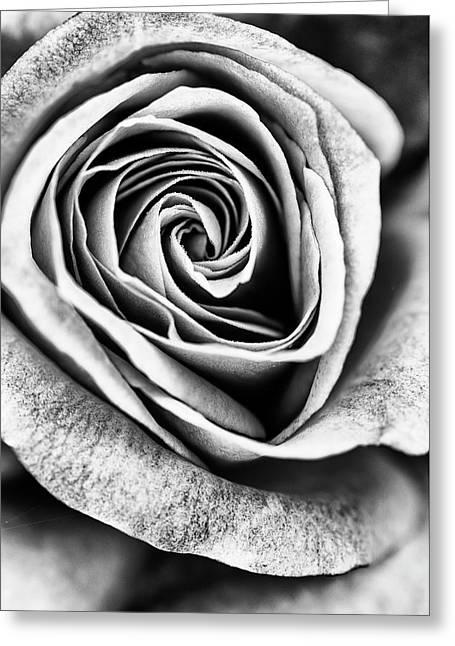Rose Swirl In Monochrome Greeting Card