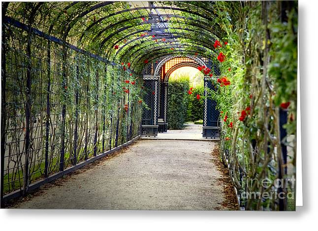 Rose Trellis In Schonbrunn Palace Greeting Card by George Oze