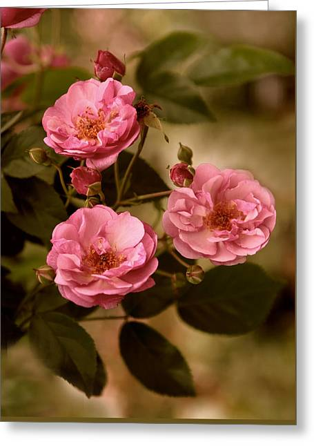 Rose Trio Greeting Card by Jessica Jenney