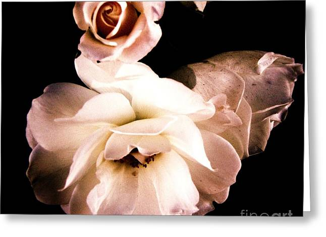 Greeting Card featuring the photograph Rose by Vanessa Palomino