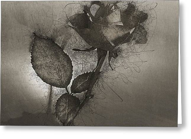 Greeting Card featuring the photograph Rose Variation#04 by Richard Wiggins