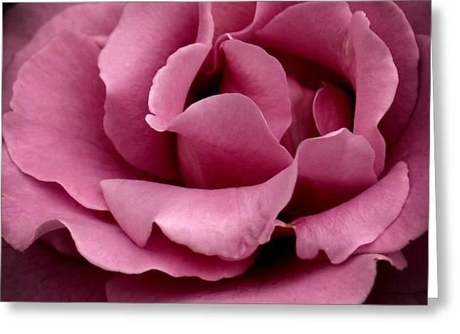 Rose Violet Waves Greeting Card