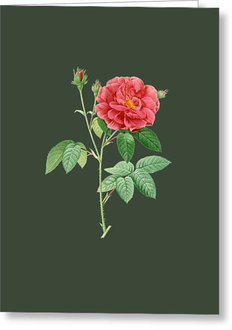Rose10 Greeting Card by The one eyed Raven