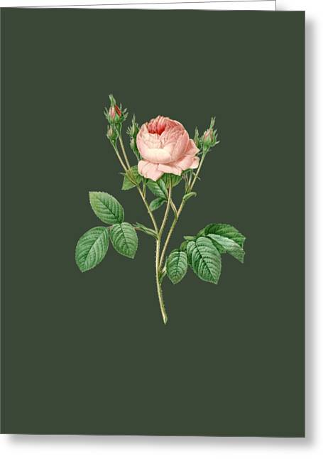 Rose17 Greeting Card by The one eyed Raven