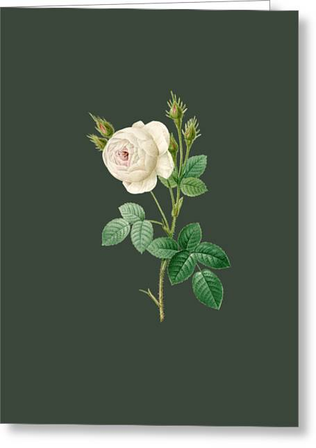 Rose26 Greeting Card by The one eyed Raven